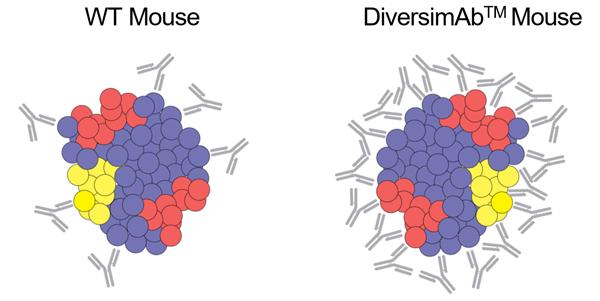 DiversimAb vs WT